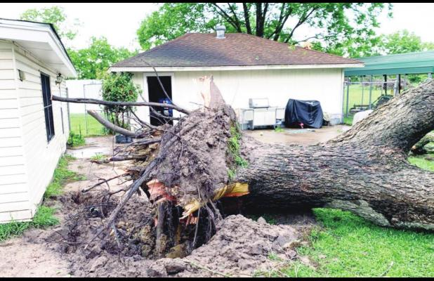 High winds near Mexia leave some tree damage, power outage around lake