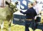 Limestone County shows in a big way